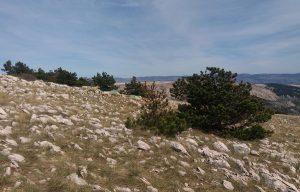 B2B Trail