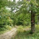 ravna gora trail