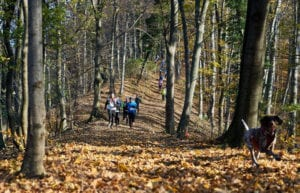 Sljeme Trail